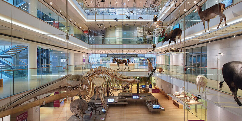MUSE Museum